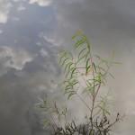 Sky Water - Rosemary DeLucco Alpert