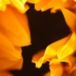 Sunflower - Rosemary DeLucco Alpert