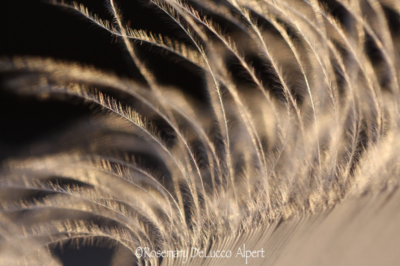 feather_0